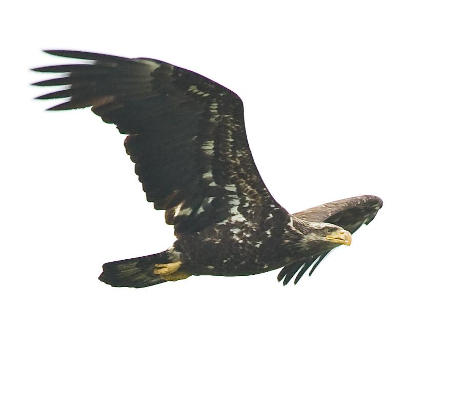 IMAGE: http://www.pbase.com/tonylong/image/99137218/original.jpg