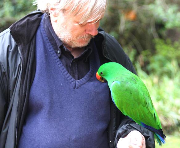 nibbling at Johns jumper: Edelpapageimännchen / male eclectus parrot