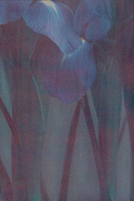 Iris Time  (Tri-color gum)