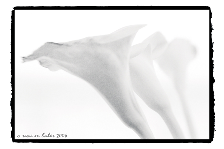 lily X  3