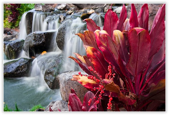 Few From Hawaii's Big Island with 40D: Canon EOS 7D / 10D - 80D Talk