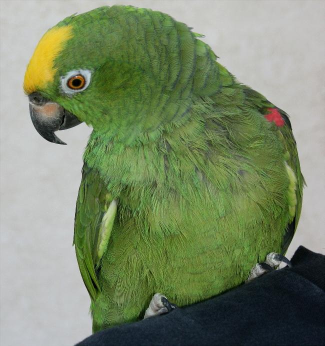 Garys bird