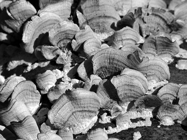 strange-fungus.jpg