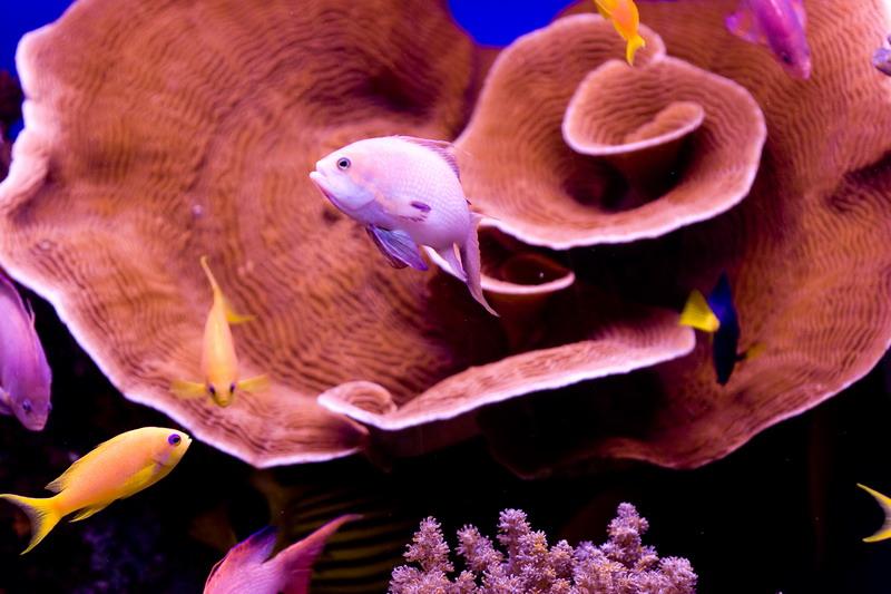 Eilat underwater observatory
