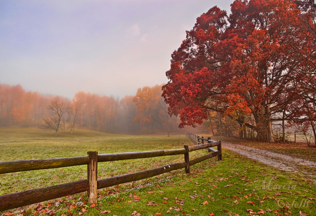 MISTY MORNING AUTUMN BEAUTY_6482.jpg