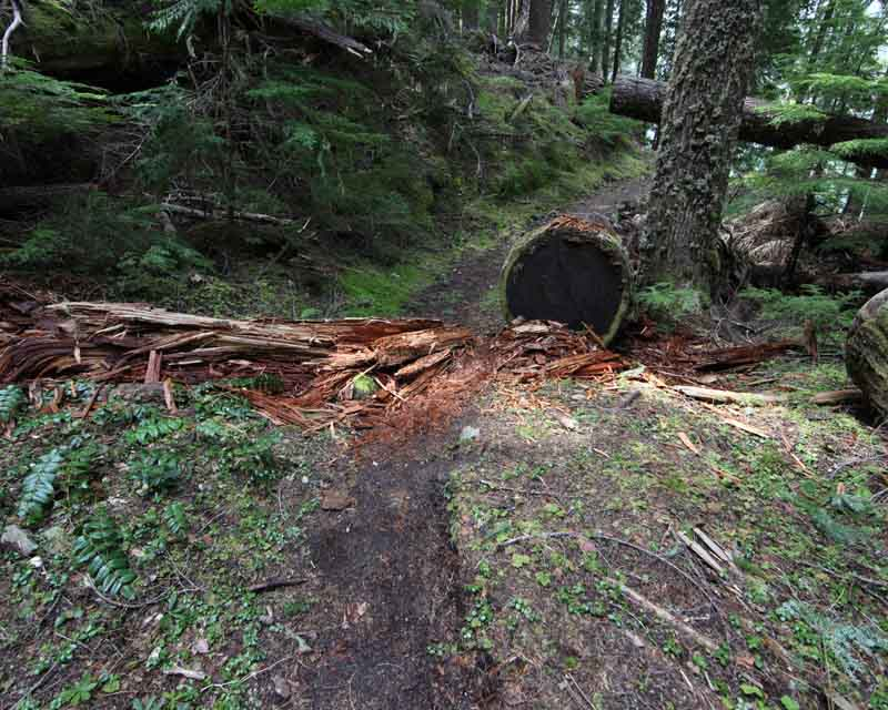 Rotted log on trail