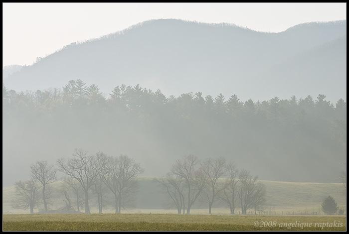 _ADR9267 foggytrees wf.jpg