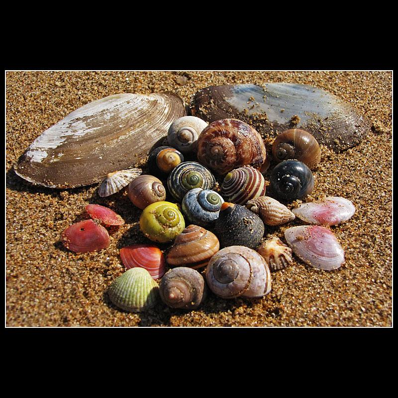 .... Sea shells collection ...