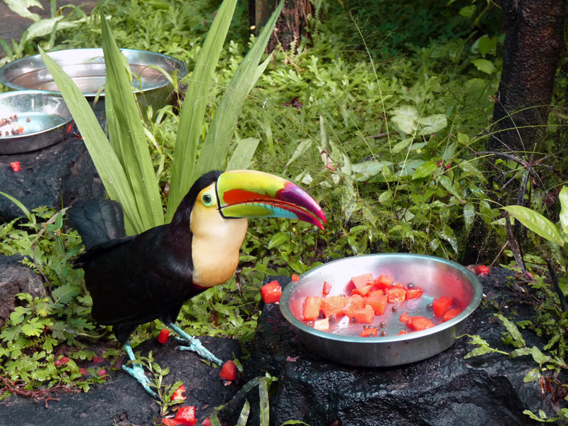 Toucan at the Butterfly Garden
