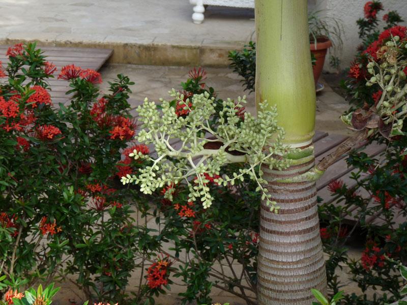 Lush tropical plants at Las Sirenas
