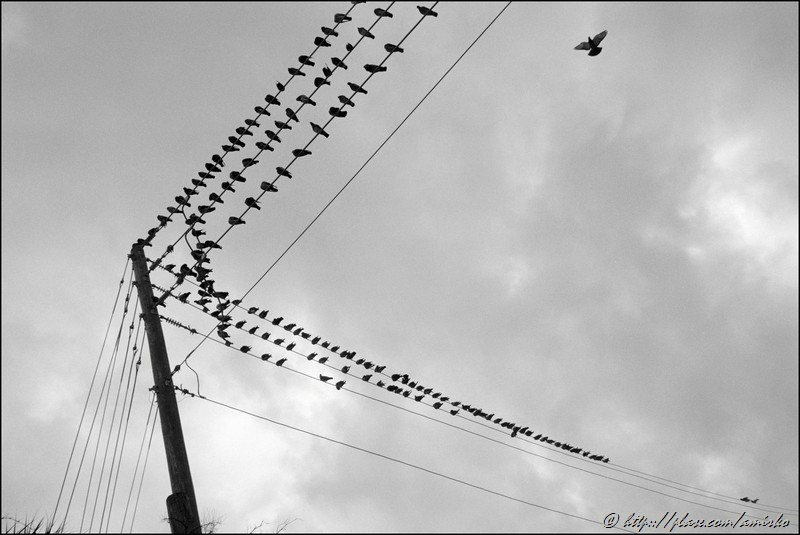Black and White photograph of a electric pole with wires and birds at Harding Avenue in North Miami beach, Florida, USA, 2009. Street Photography of Miami, San Francisco and Key West by Emir Shabashvili, see http://street-foto.com, http://miamistreetphoto.com, http://miamistreetphotography.com or http://miamistreetphotographer.com