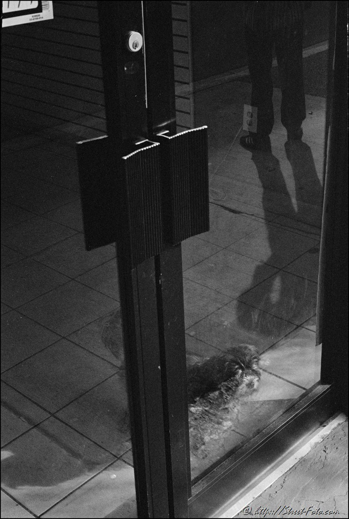 Dog waiting behind the glass in Downtown Miami, Florida, USA, 2011. Street Photography of Miami, San Francisco and Key West by Emir Shabashvili, see http://street-foto.com, http://miamistreetphoto.com, http://miamistreetphotography.com or http://miamistreetphotographer.com