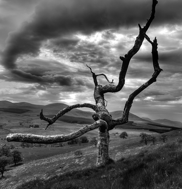 Dead Overcast