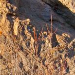 zComp3 P1060889 Rocks by Fz50.jpg