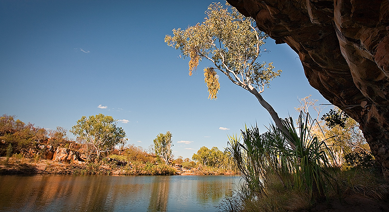 Manning Gorge and gum tree