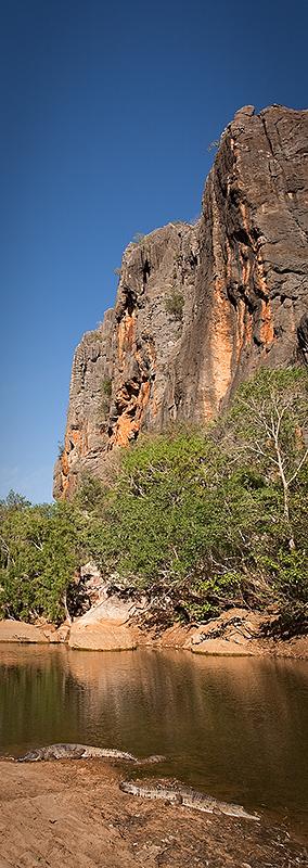 Windjana Gorge crocodiles