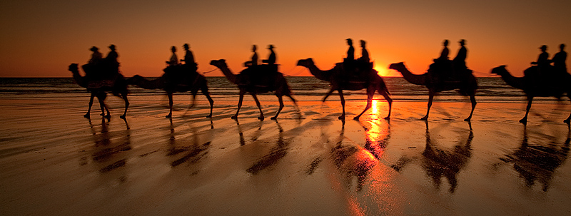Camels silhouetted on Cable Beach
