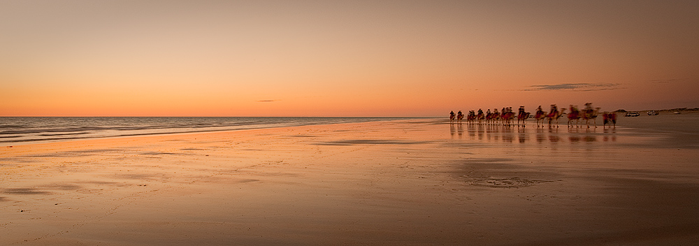Camels at dusk on Cable Beach