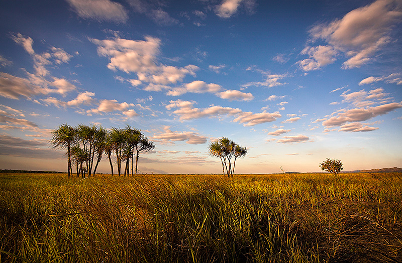 Hawk Dreaming Savannah View
