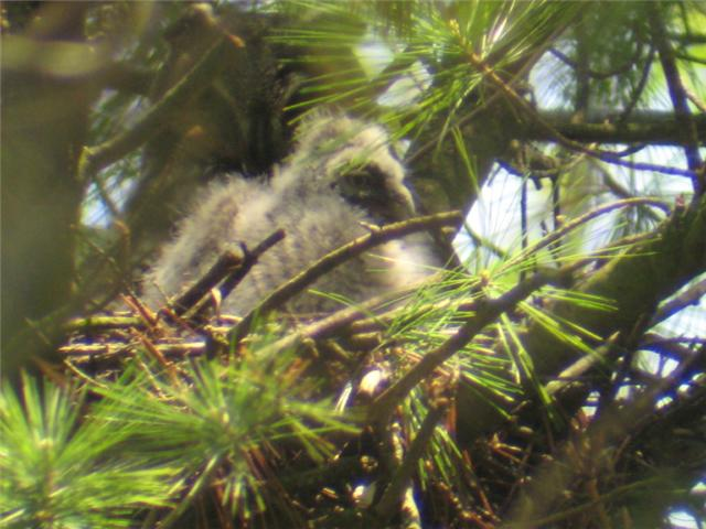Baby and Adult in Nest