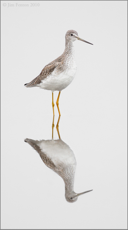 Yellow Legs Cloudy Reflection