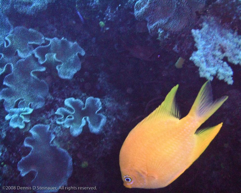 5/21/08 - Reef Resident<br><font size=3>DS20080521b_0068Reef_Resident.jpg</font>