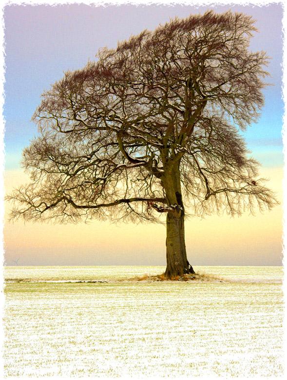 A46 snowtree