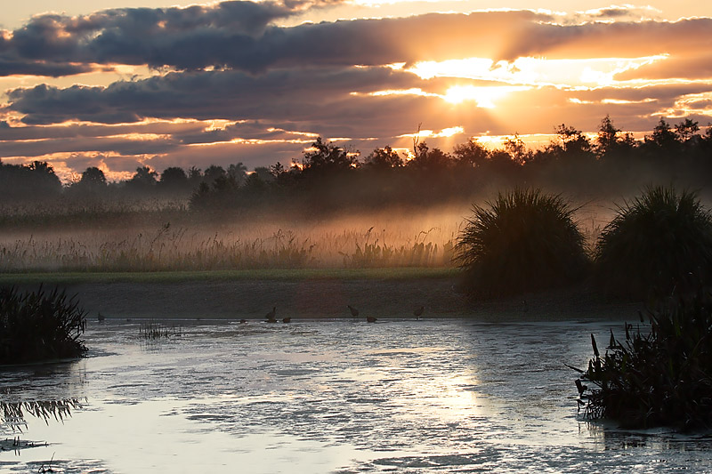 Sunrise (Green Cay wetlands, Fl)