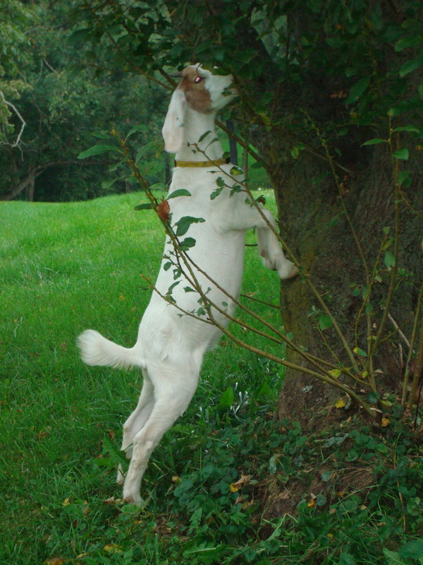 Martha is climbing the tree again!