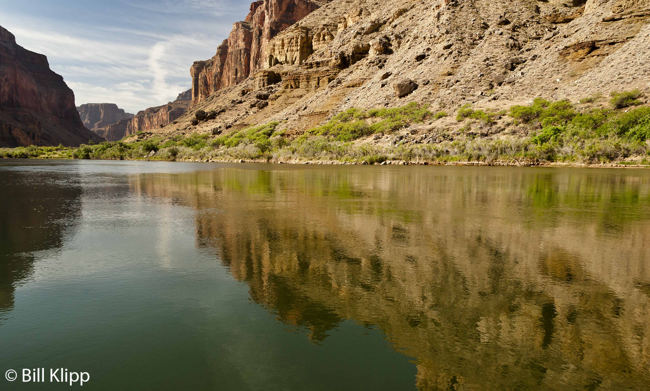 Colorado River Reflections  1