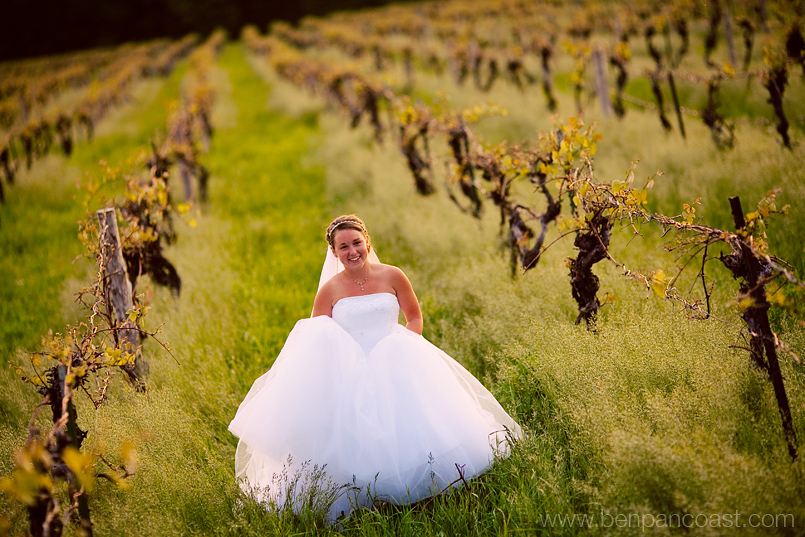 Wedding pictures of a bride at a vineyard at sunset in southwest michigan.