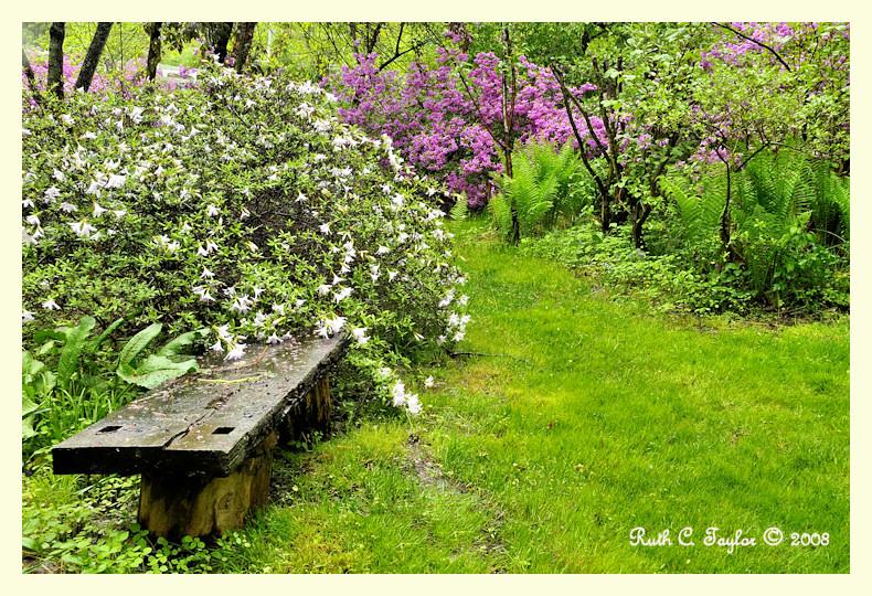 Rainy Afternoon in Cedar Ridge Garden
