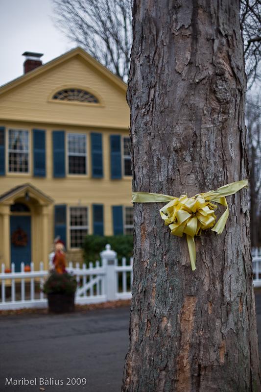 Tie a yellow ribbon round that old oak