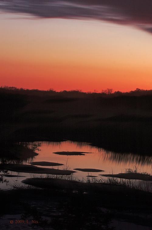 Night Marsh