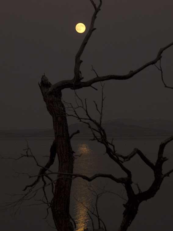 <B>Tree</B> <BR><FONT SIZE=2>Tule Lake, California - September 2008</FONT>