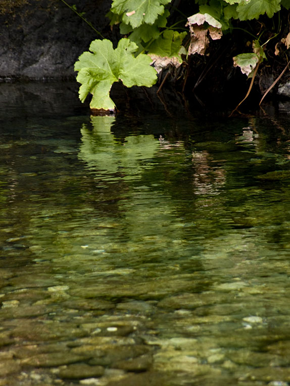 <B>Lingering </B> <BR><FONT SIZE=2>Trinity River, August, 2007</FONT>