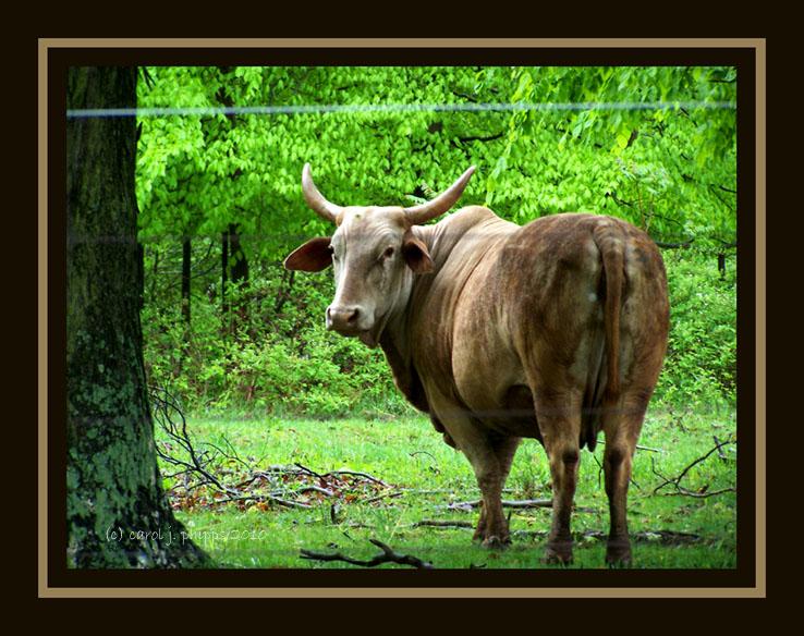 Trust no Bull, unless named Ferdinand!