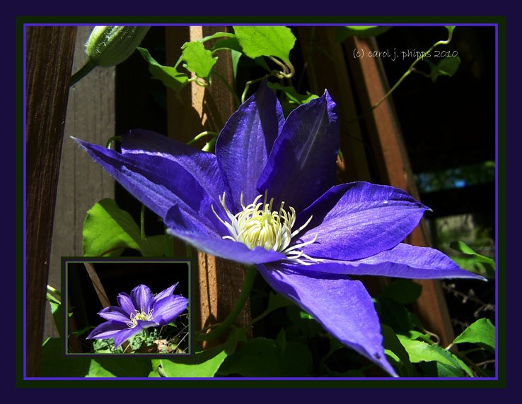 My Cousin Connies Treat.