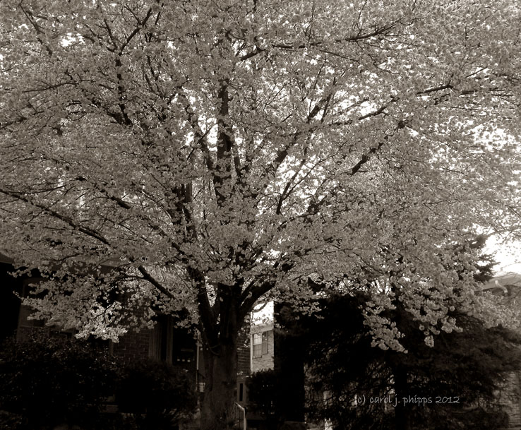 Poetry ~ Early Bloomer