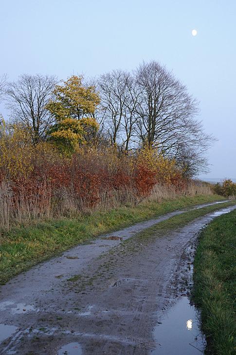 Autumn with the moon / Efterår med månen