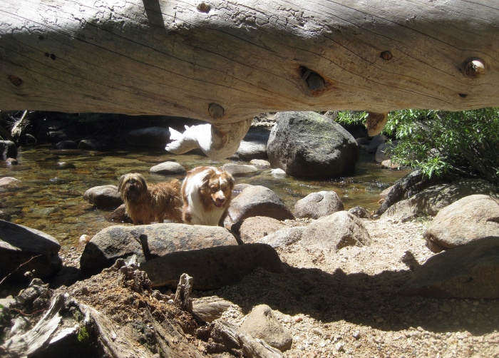 Stopping to Play Beside a Lovely Little Creek in Yosemite Park