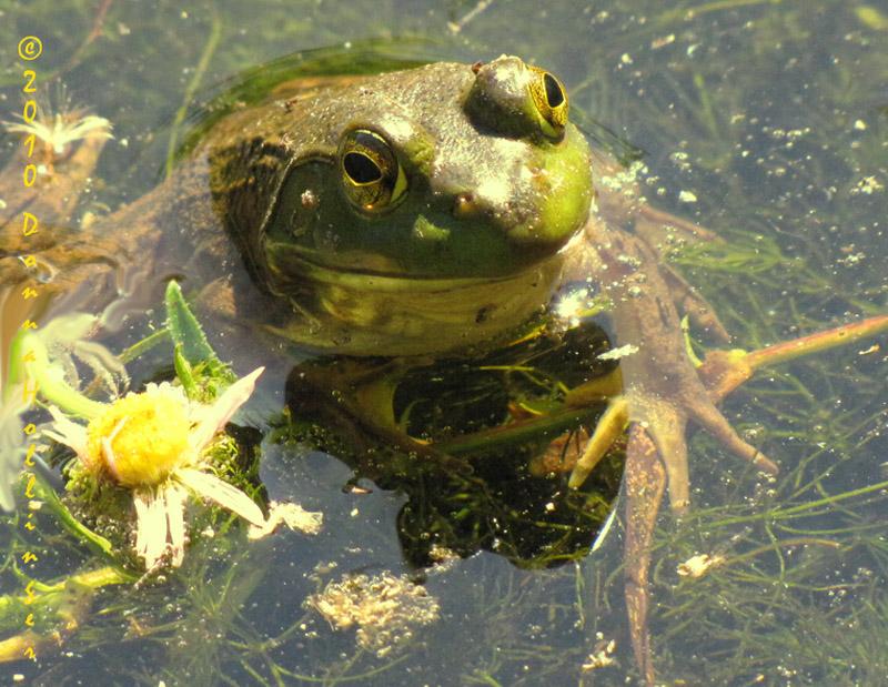 greenfrog.0133.jpg