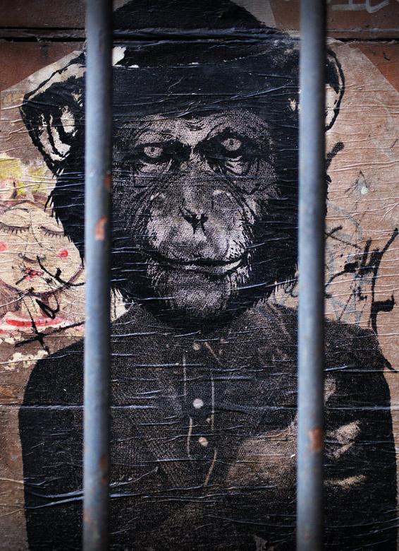 mono encerrado