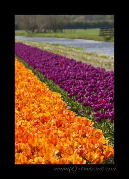 Endless rows of colours.