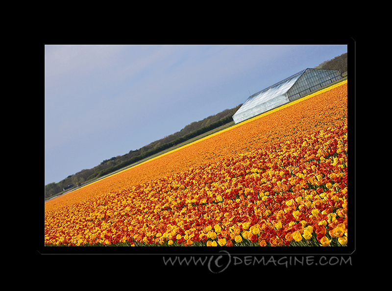 An orange field.