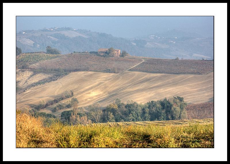 Lombardy fields