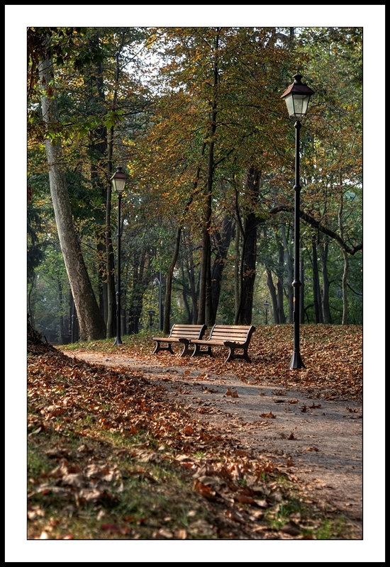 Leaves in  park