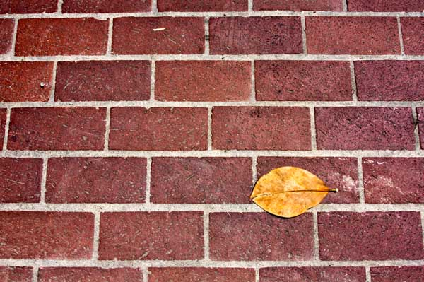 Leaf Series: Bricked