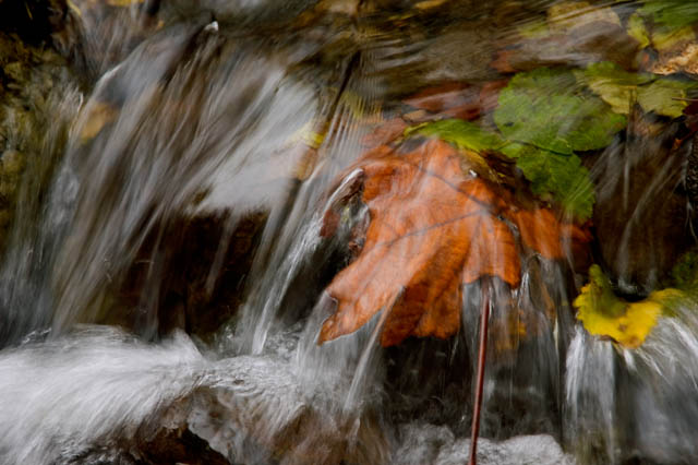 Leaves In The Rapids