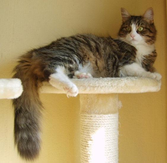 Corina Asuancats.jpg